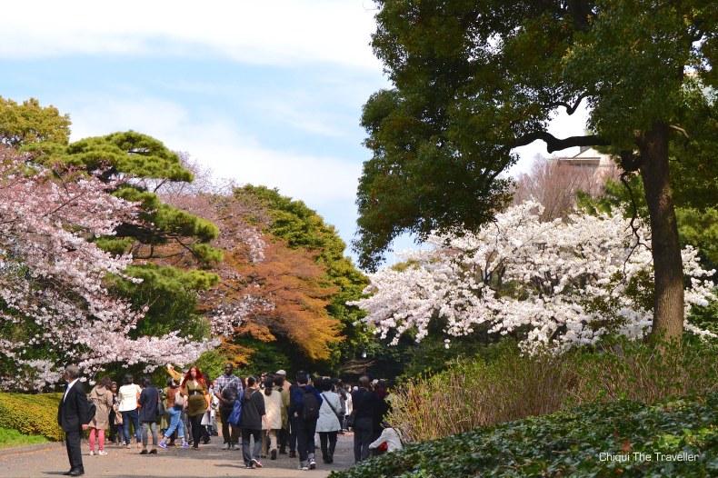 Imperial Palace Gardens sakura Tokio 2